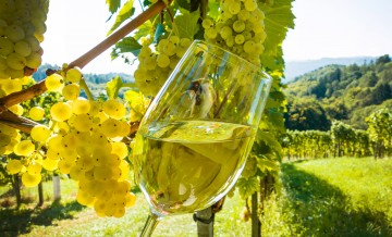 Weinglas mmit Wein im Weingarten